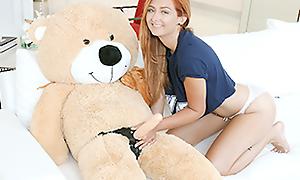 Immature Spinner Aspersive Gender a Teddy Bear